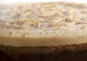 levaduras para cerveza