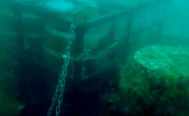 roban cerveza madurando en el mar